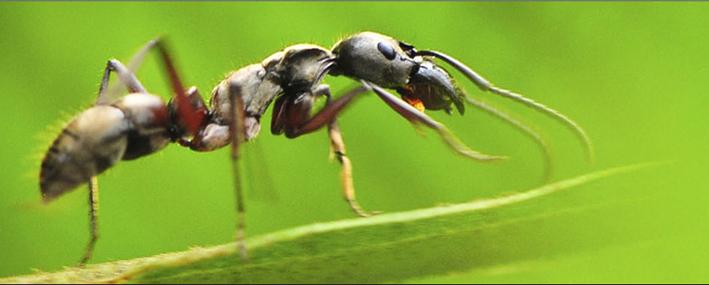 ants4.jpg
