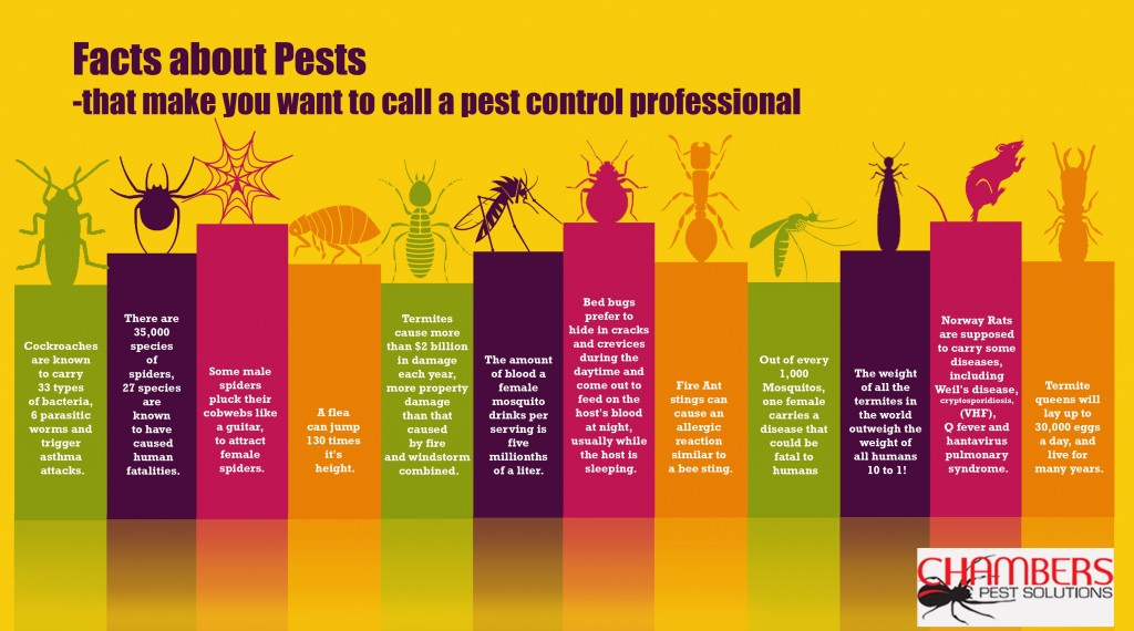 Tips Looking For A Pest Control Company