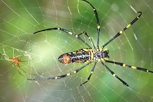 services_spider-600x400