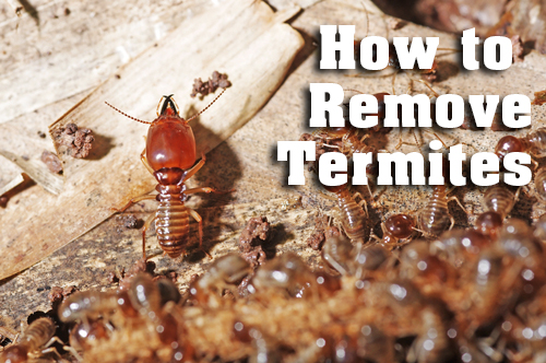termites inspection services