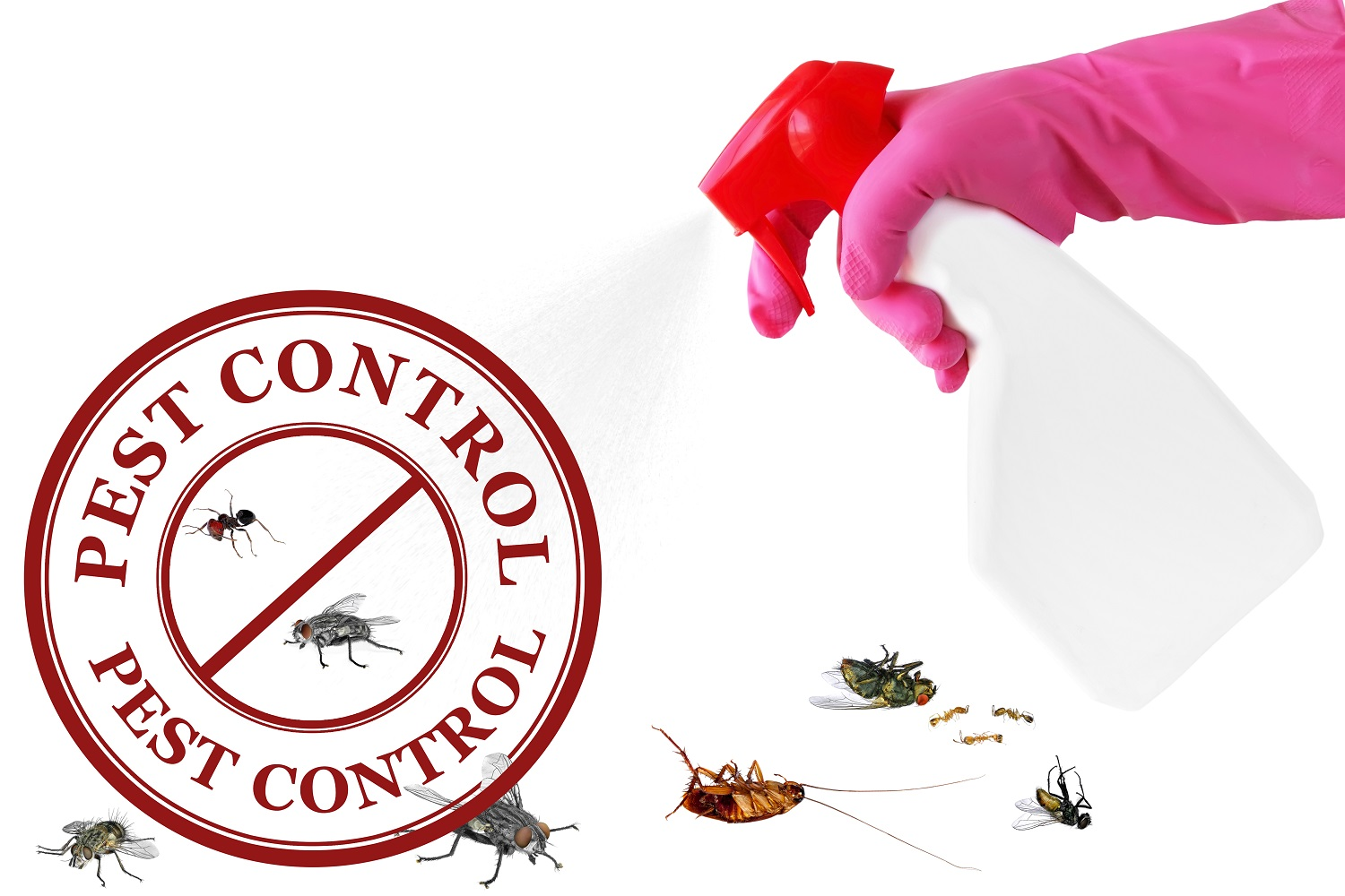 pest-control-perth-services.jpg