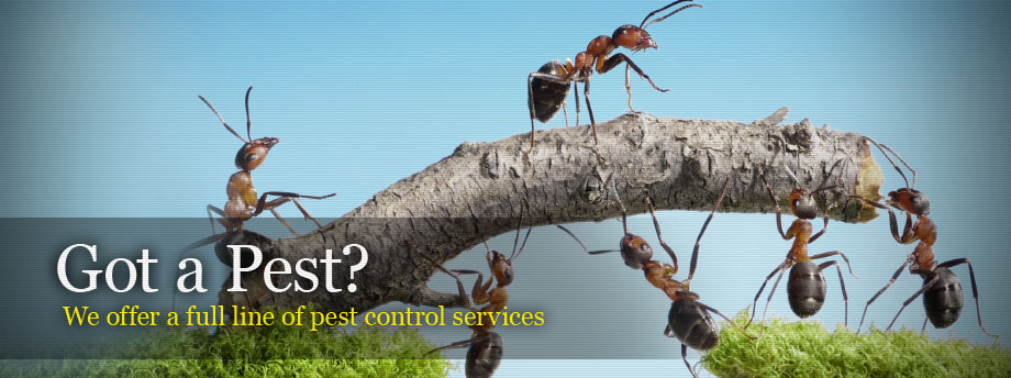 Pest-Control-Service