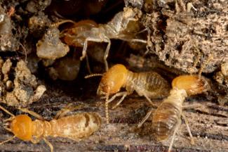 termite-removal-perth