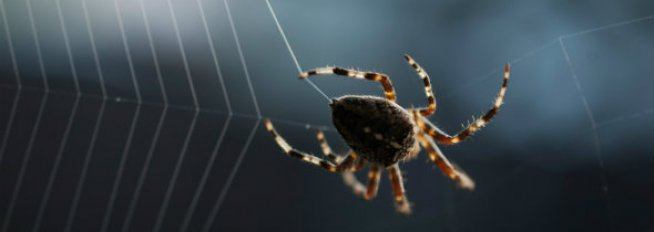 spider control services in WA