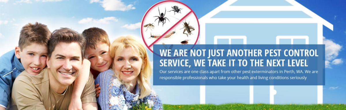 building & pest inspection services