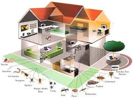 pests inspection services