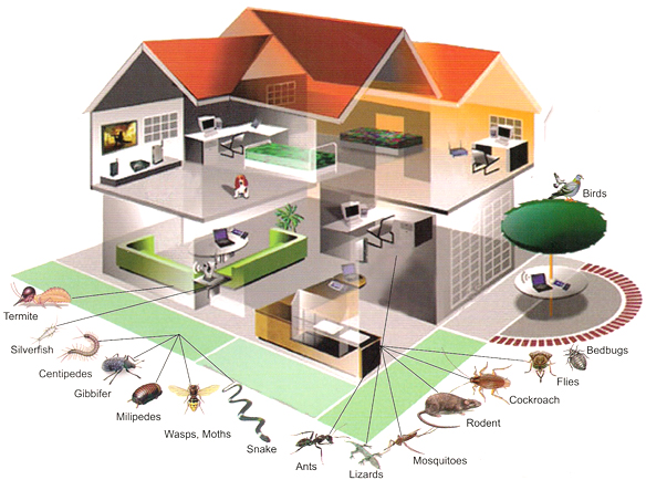 commercial property pest inspection