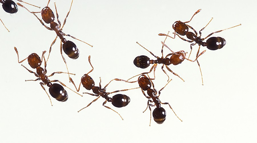 ants control inspections