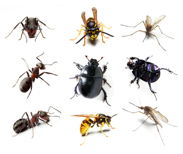house pest control Perth
