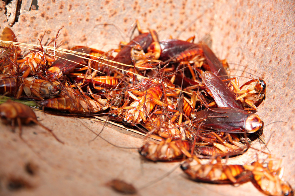 cockroaches control services perth