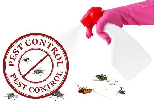 pest control perth services