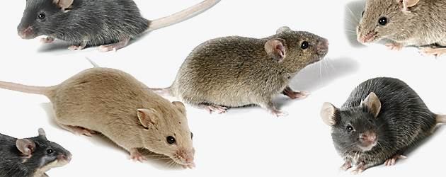 mouse control perth