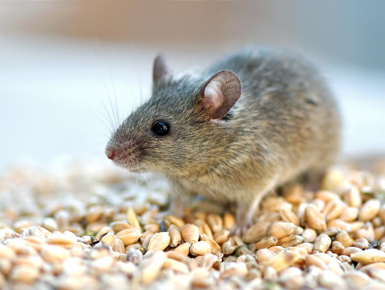 mouse control services