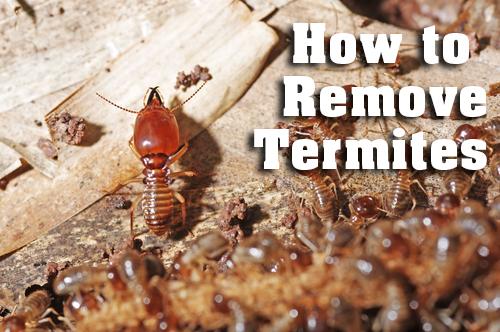 termite inspection Perth
